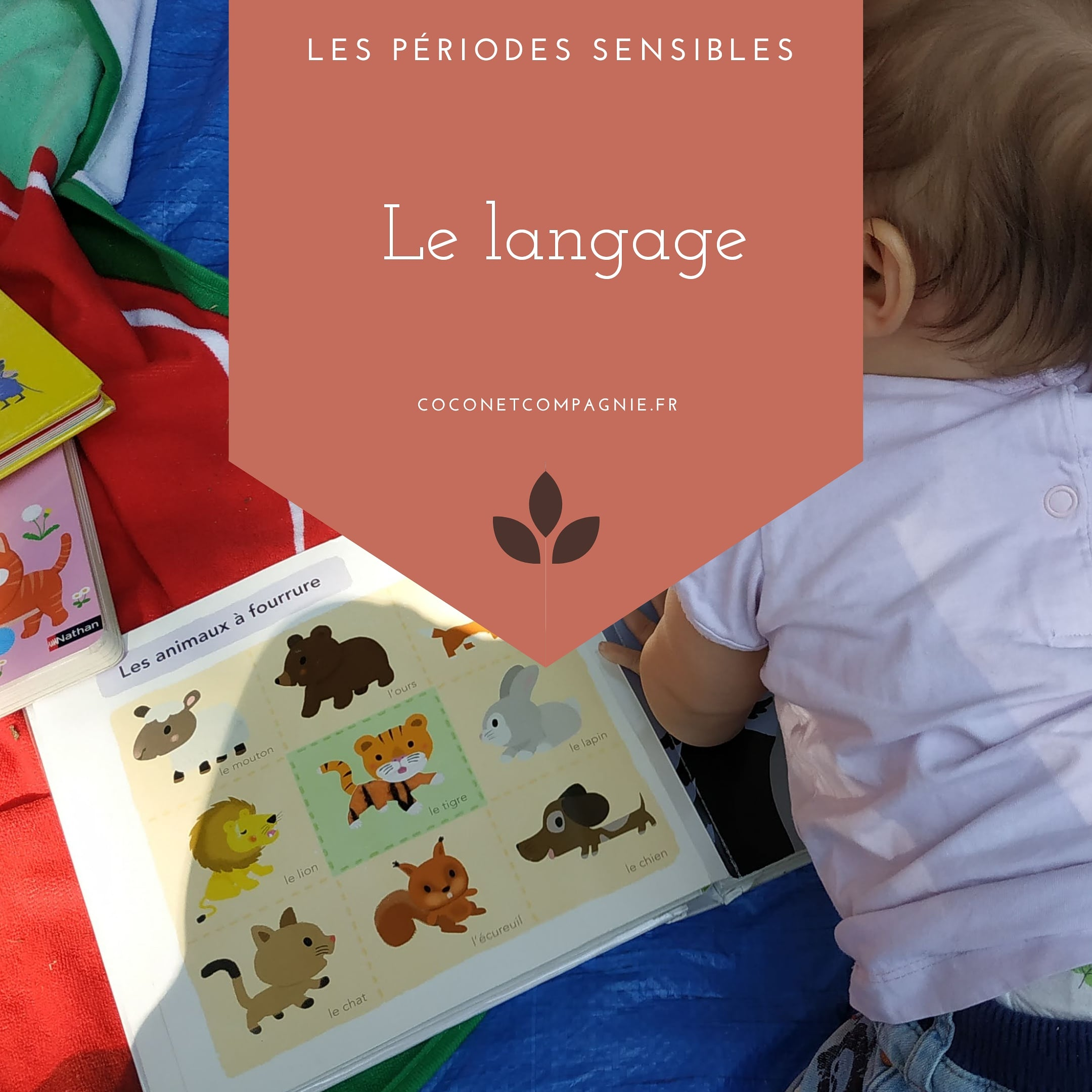 periode_sensible_langage_cocon_compagnie